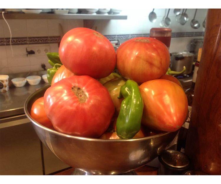 Tomates ecológicos de nuestro huerta