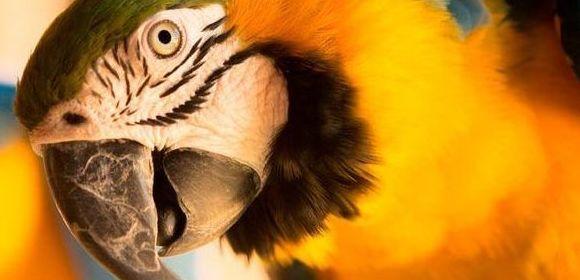 Guía de cuidados de aves psitácidas