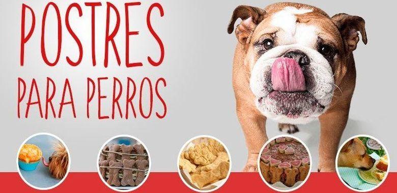 Recetas gourmet para perros
