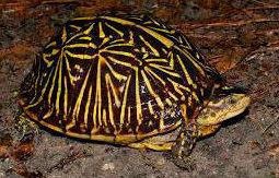 ¿Cuantas tortugas de las siguientes has visto alguna vez en cautividad?