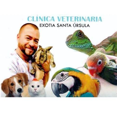 Profesionalidad: Servicios de Clinica Veterinaria Exotia Santa Ursula