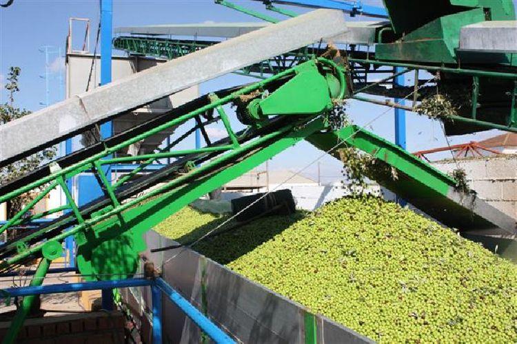Venta de aceitunas en toda España