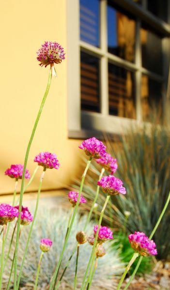 Mantenimiento de jardines en urbanizaciones y portales