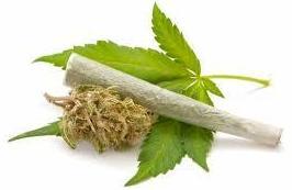 """""""Alcohol, cannabis y cocaína, las drogas que más afectan a la conducción"""""""