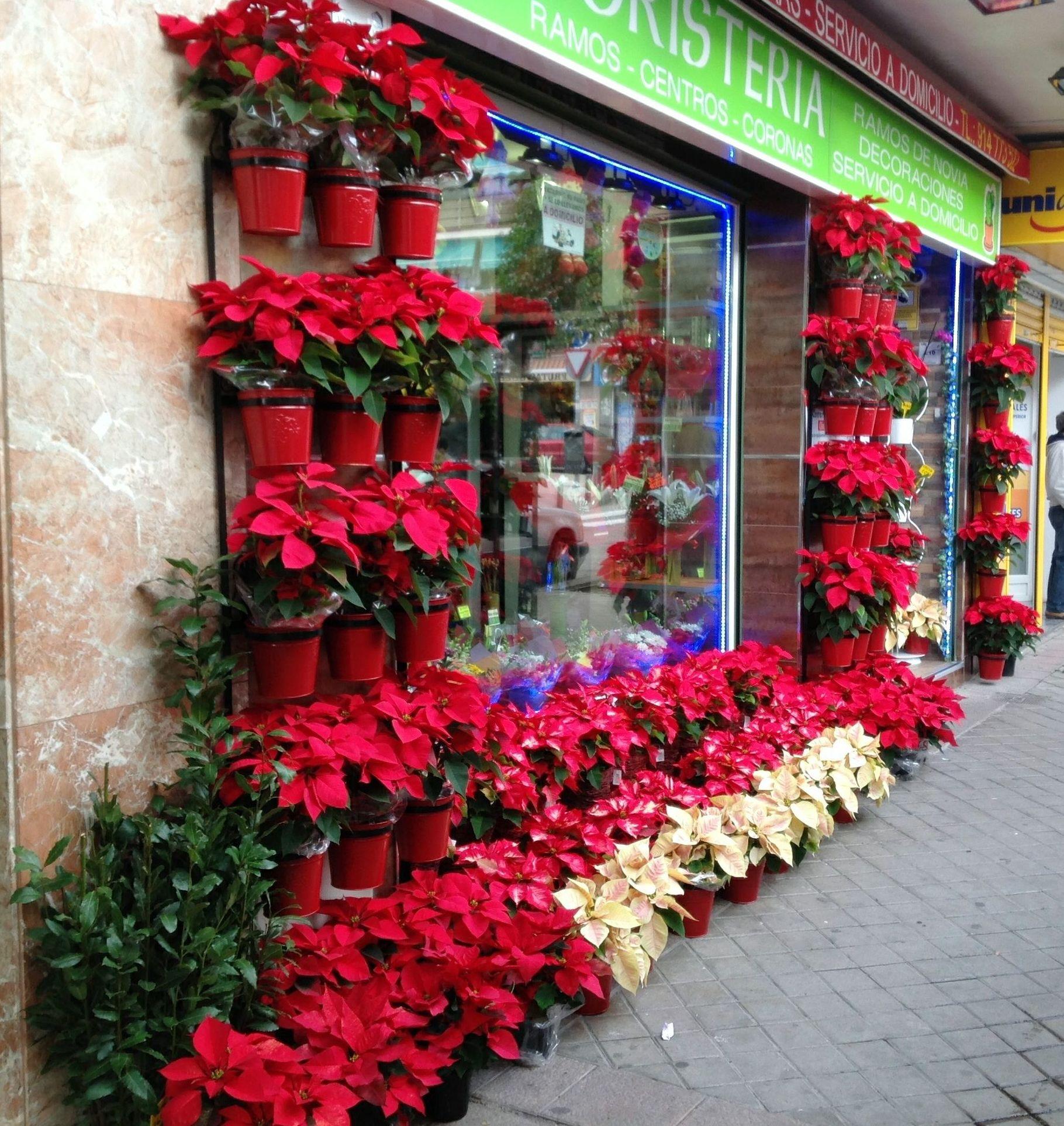 Entrada a la floristería