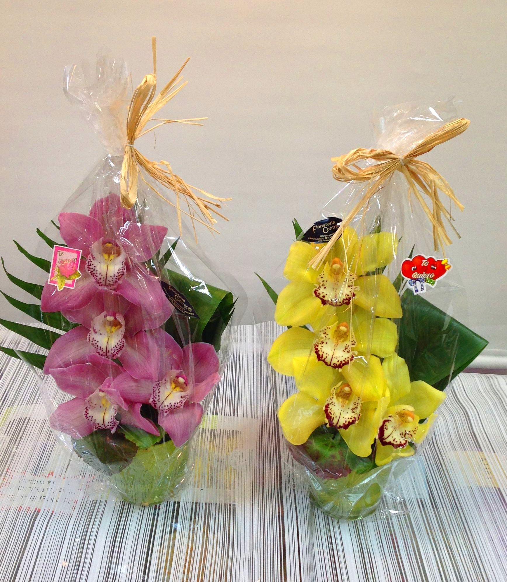 Bara de Orquídeas :  de Floristería Contreras