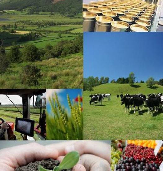 Tramitación y gestión de ayudas y subvenciones: Servicios de Asesores Agrarios Rifaterra