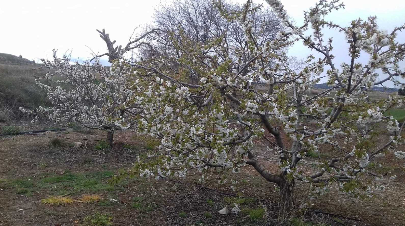 Picture 7 of Asesores agrarios in El Burgo de Ebro | Asesores Agrarios Rifaterra