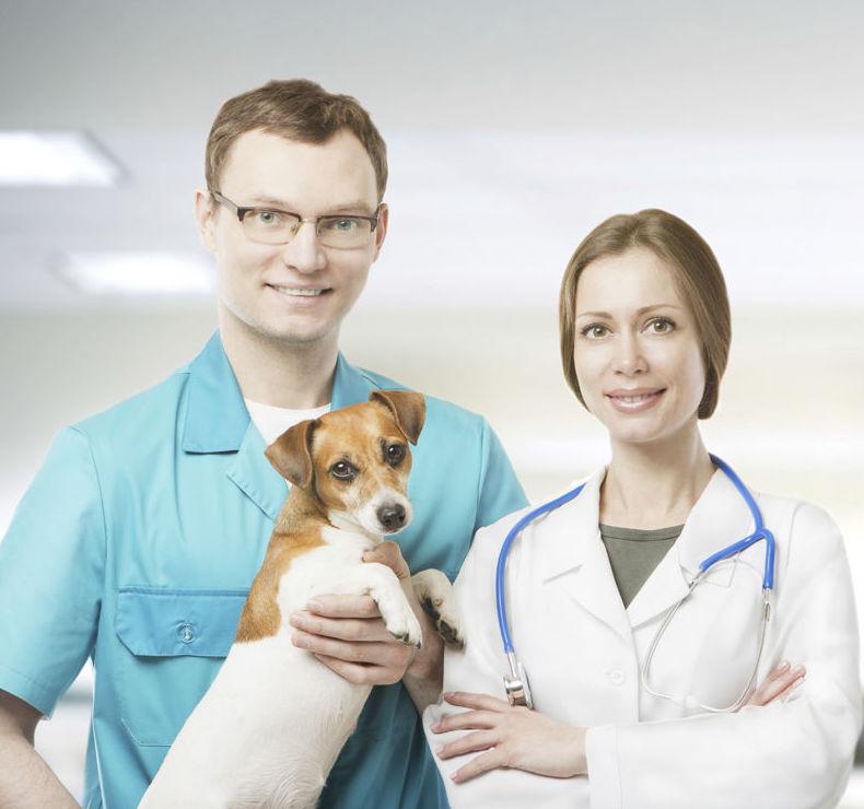 Clínica veterinaria en Cádiz