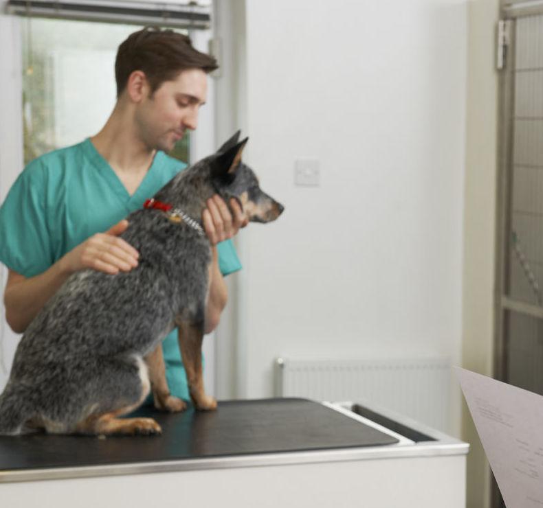Consultas veterinarias