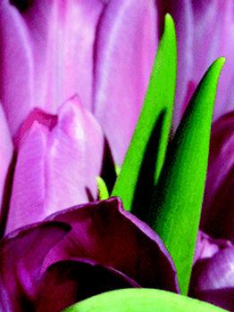 Foto 9 de Limpieza (empresas) en  | Jardinería y Limpieza Res, S.L.