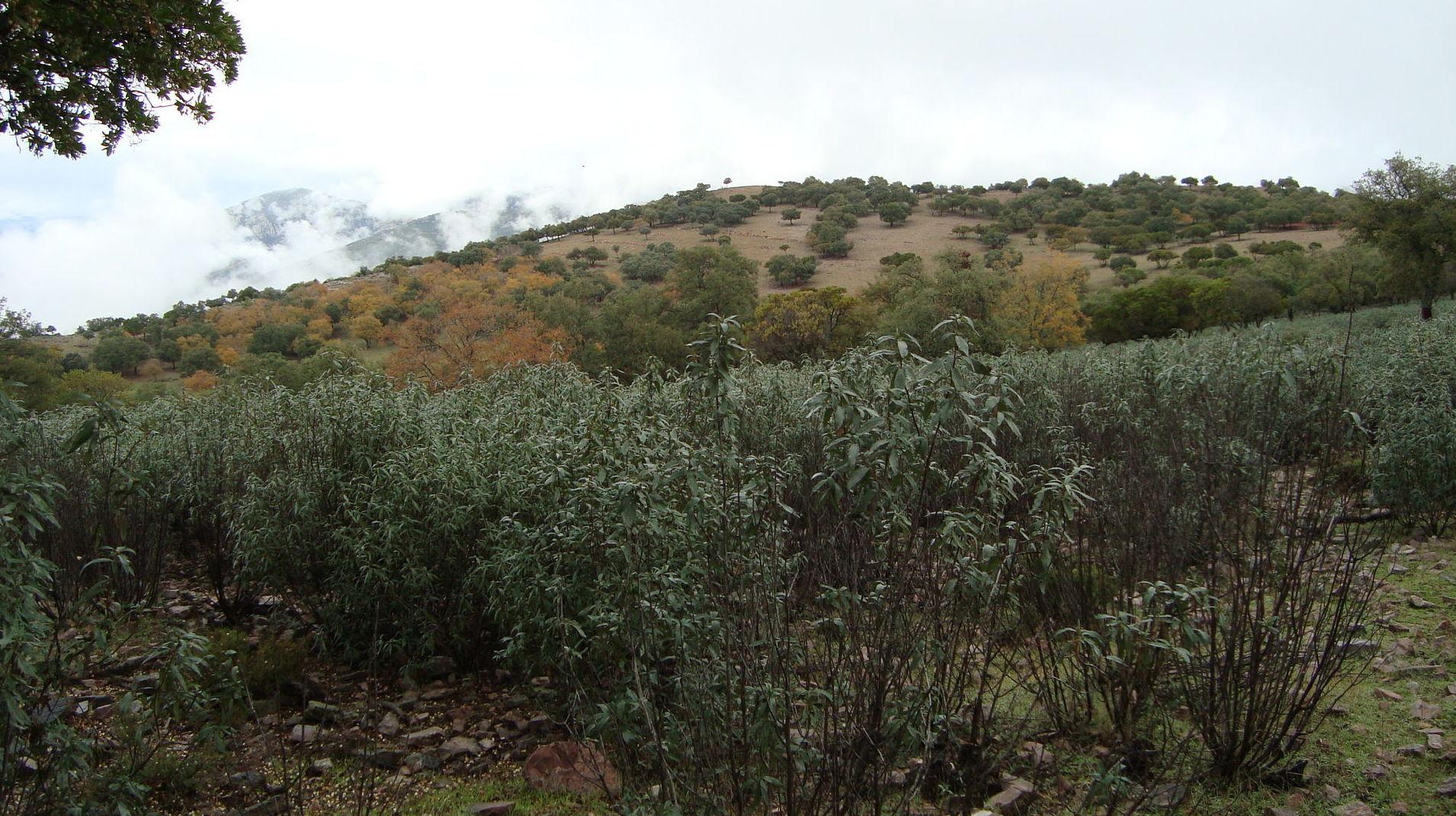 Monte mediterráneo