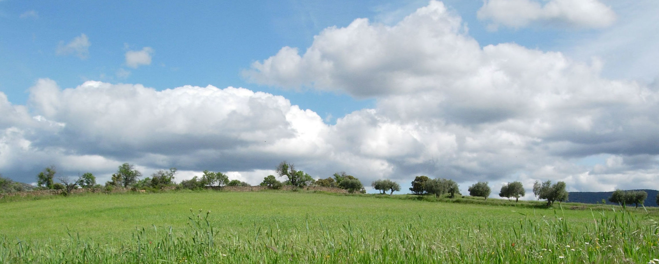 Oferta de emoleo en Castilla la Mancha