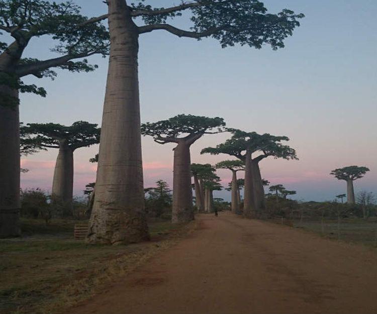 Viajes de luna de miel a Madagascar
