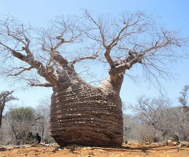 Circuitos por Madagascar a medida