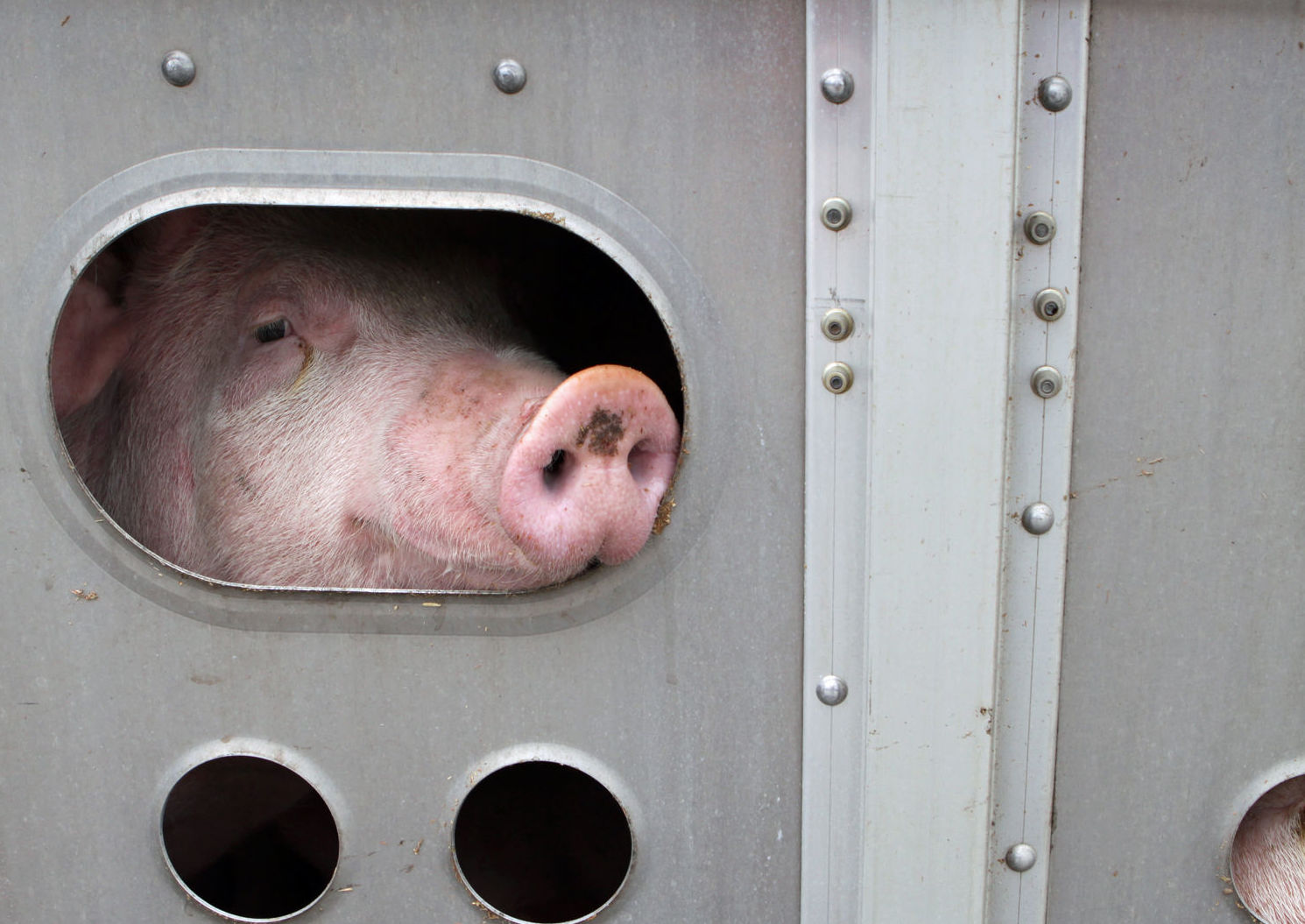 Empresa de transportes de animales vivos