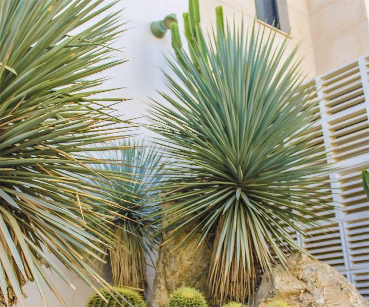 Mantenimiento de jardines en Vera con podas especiales