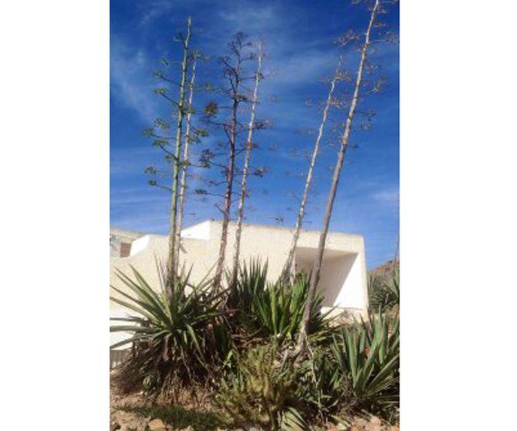 Cultivo de plantas en Vera