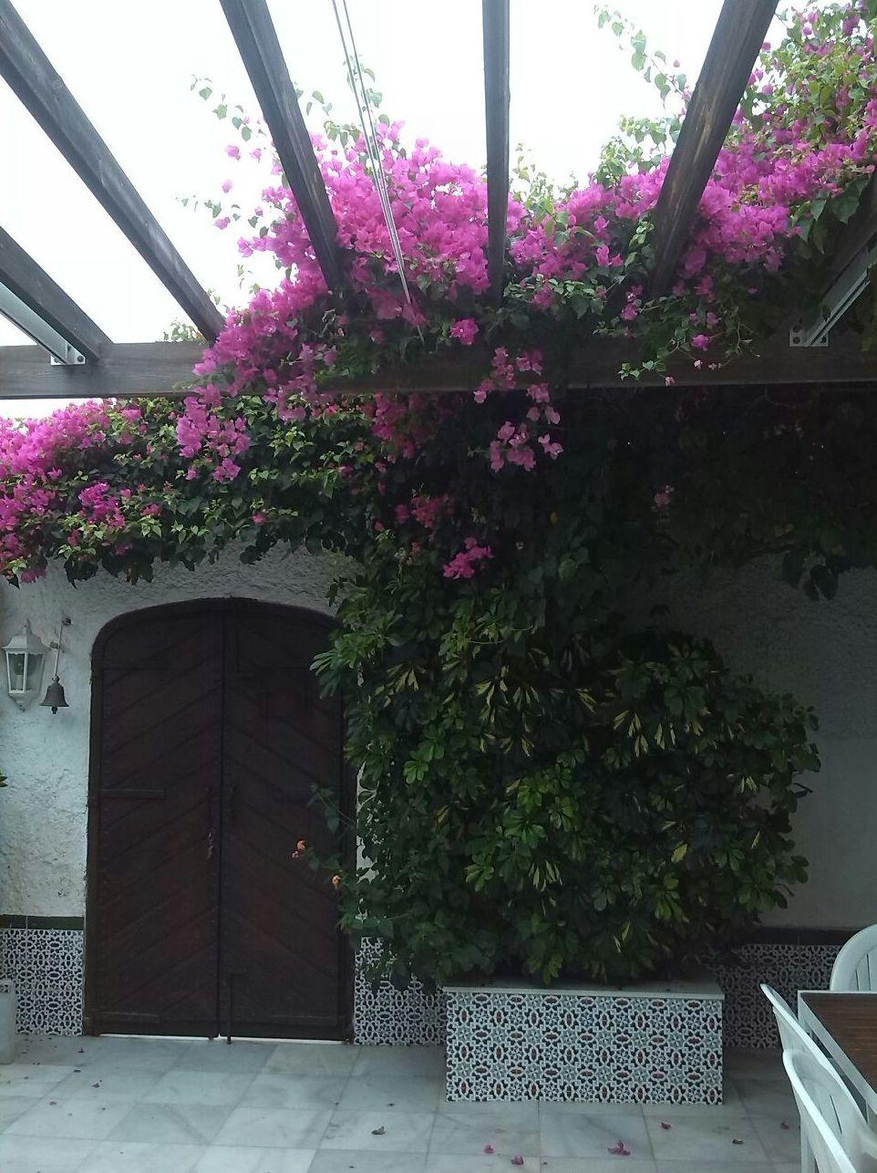 Foto 31 de Diseño y mantenimiento de jardines en Almería | Jardínicos