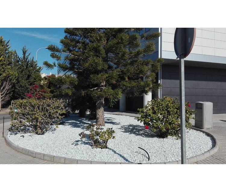 Diseño de jardines comunitarios en Vera