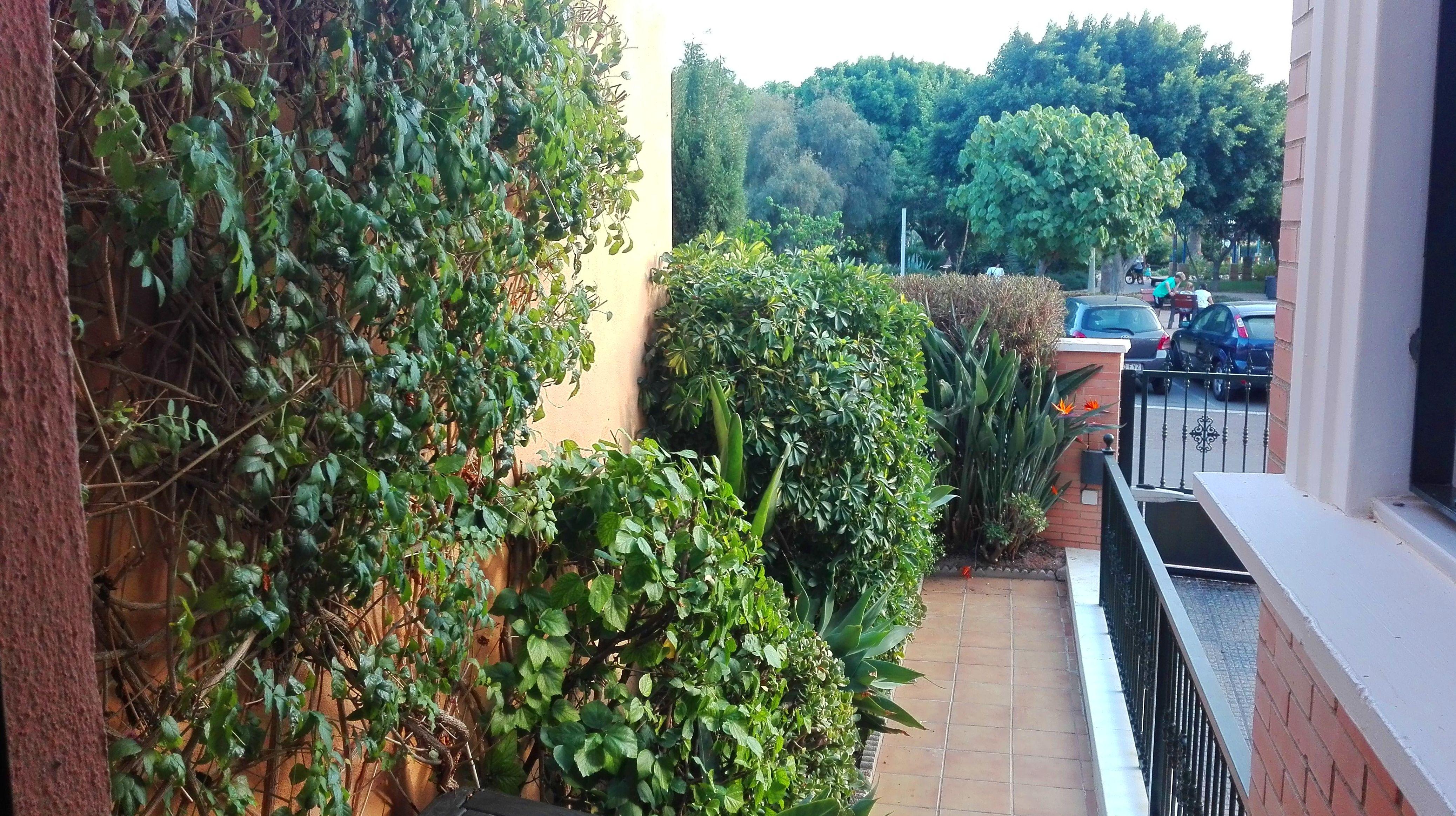 Foto 30 de Diseño y mantenimiento de jardines en Almería | Jardínicos