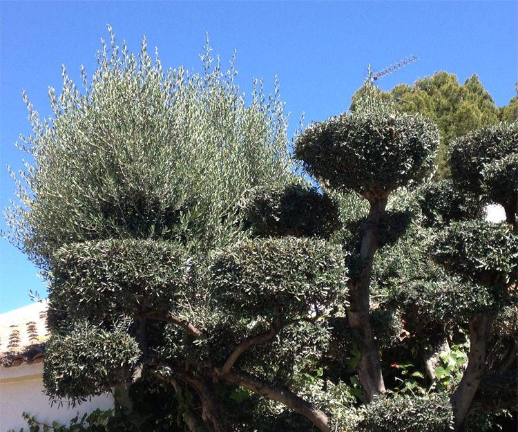 Mantenimiento de jardines en Betera