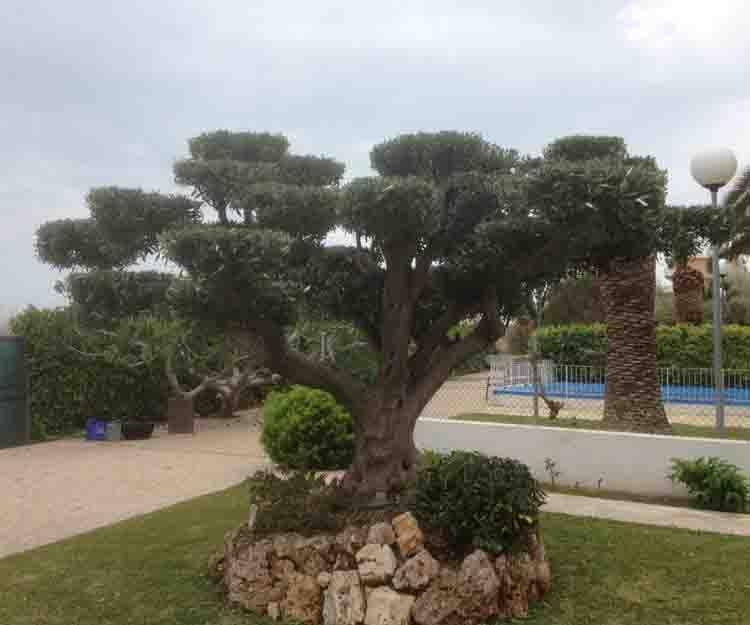 Diseño de jardines en El Puig