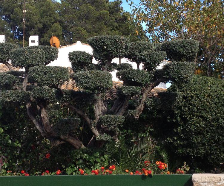 Mantenimiento de jardines en Puebla Farnals