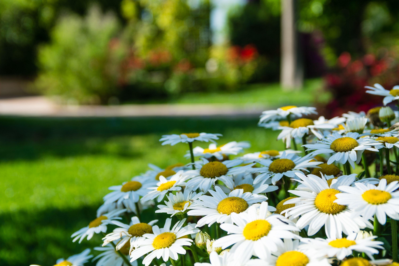 Trabajos de jardinería en general