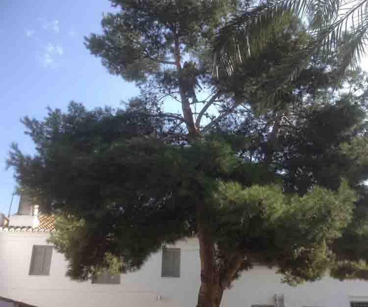 Mantenimiento de jardines en Puçol