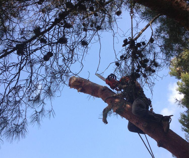 Poda de árboles en Serra