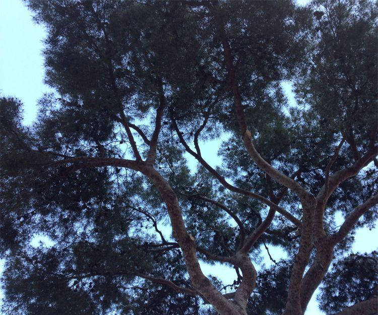 Poda de árboles en L´Eliana