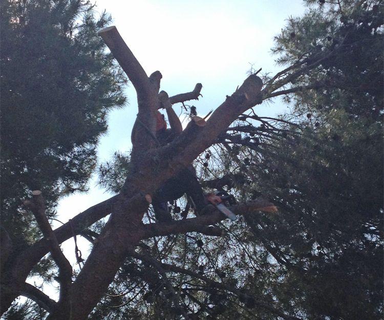 Poda de árboles en Naquera