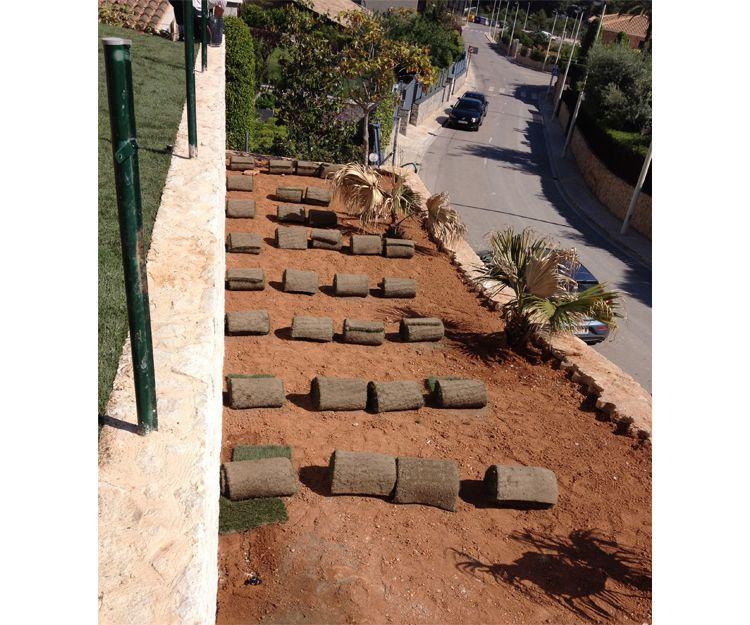 Mantenimiento de jardines en Torrent
