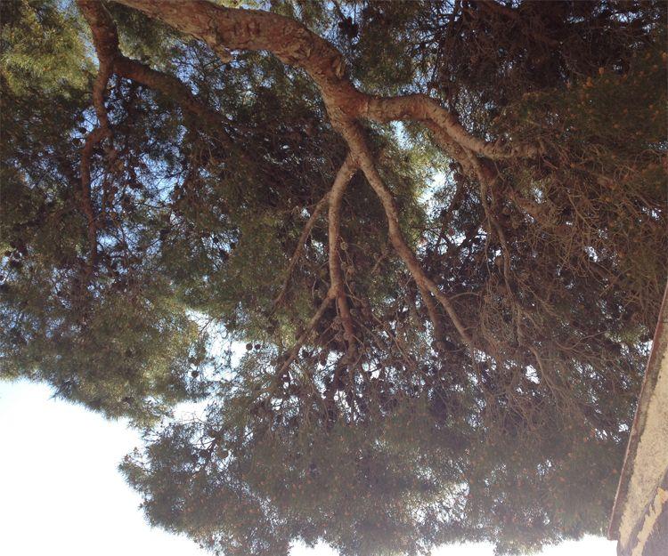 Poda de árboles en San Antonio de Benagever