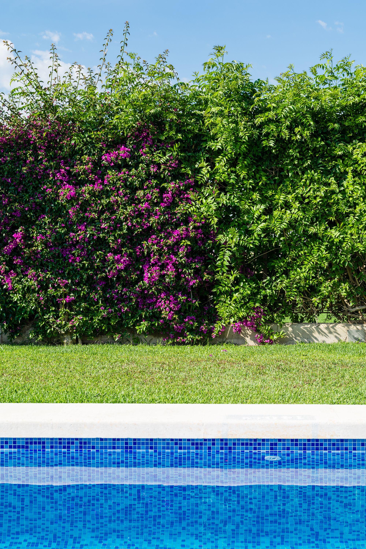 Tratamiento fitosanitario de jardines en Puçol