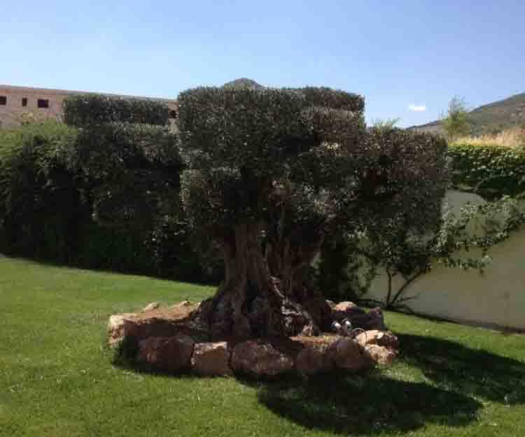 Diseño de jardines en Betera