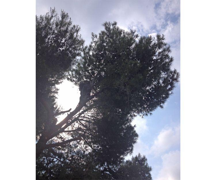 Poda de árboles en Sagunto