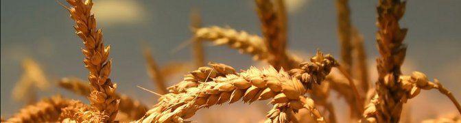 Cereales: Productos y servicios de Piensos Fauna