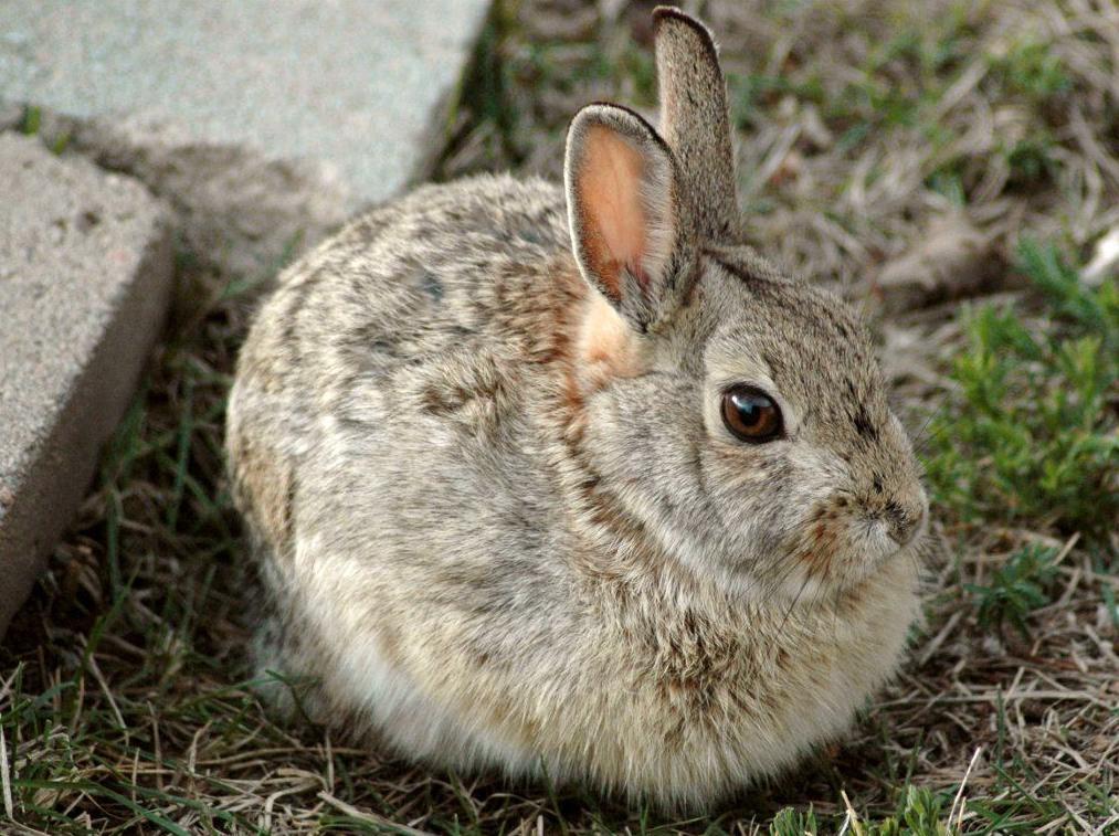 Piensos para conejos: Productos y servicios de Piensos Fauna