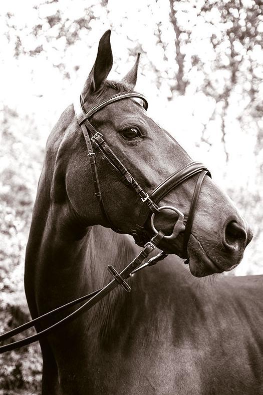 Piensos para caballos: Productos y servicios de Piensos Fauna