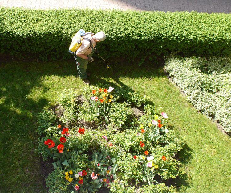 Prepara el jardín para la primavera