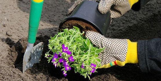 Plantación: Servicios de Jardinería JMG