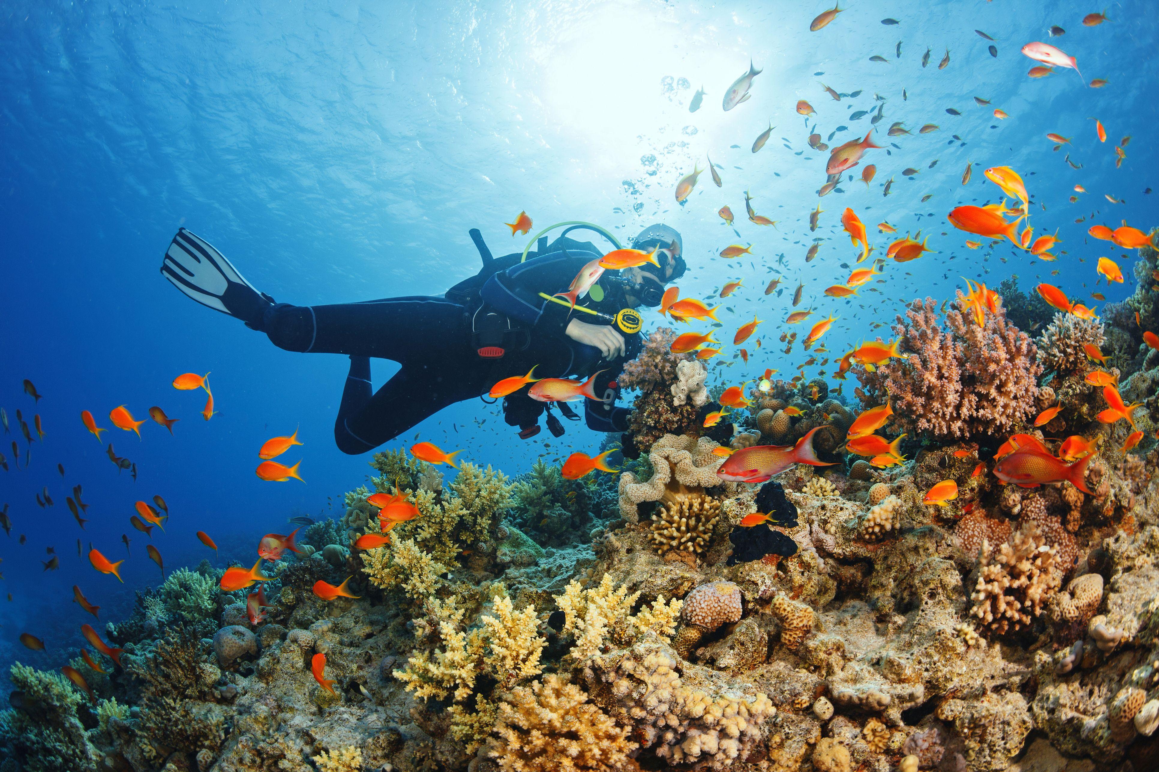 Reconocimiento para obtención de permiso de submarinismo