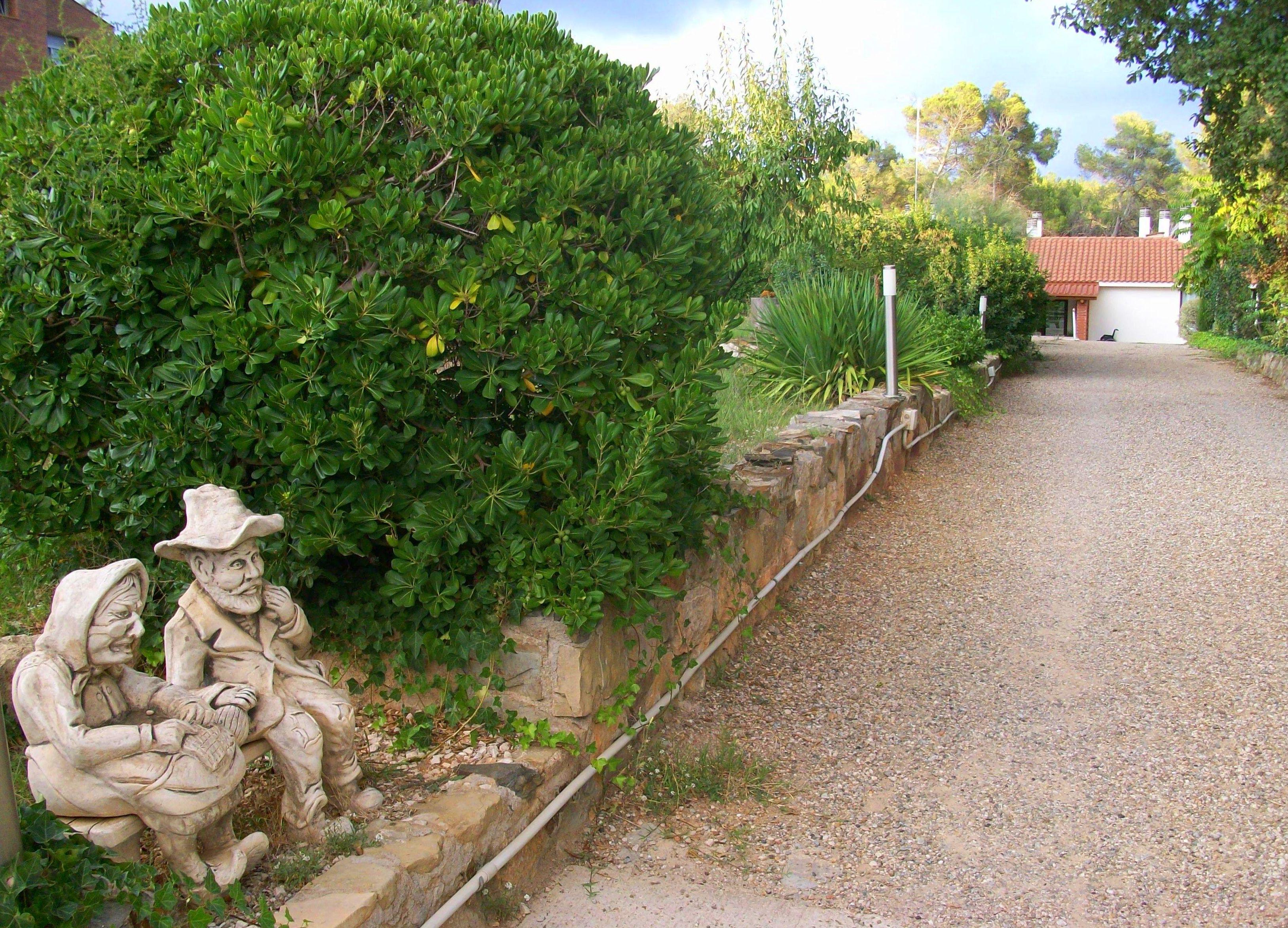 Foto 15 de Residencias geriátricas en Matadepera | El Pinar