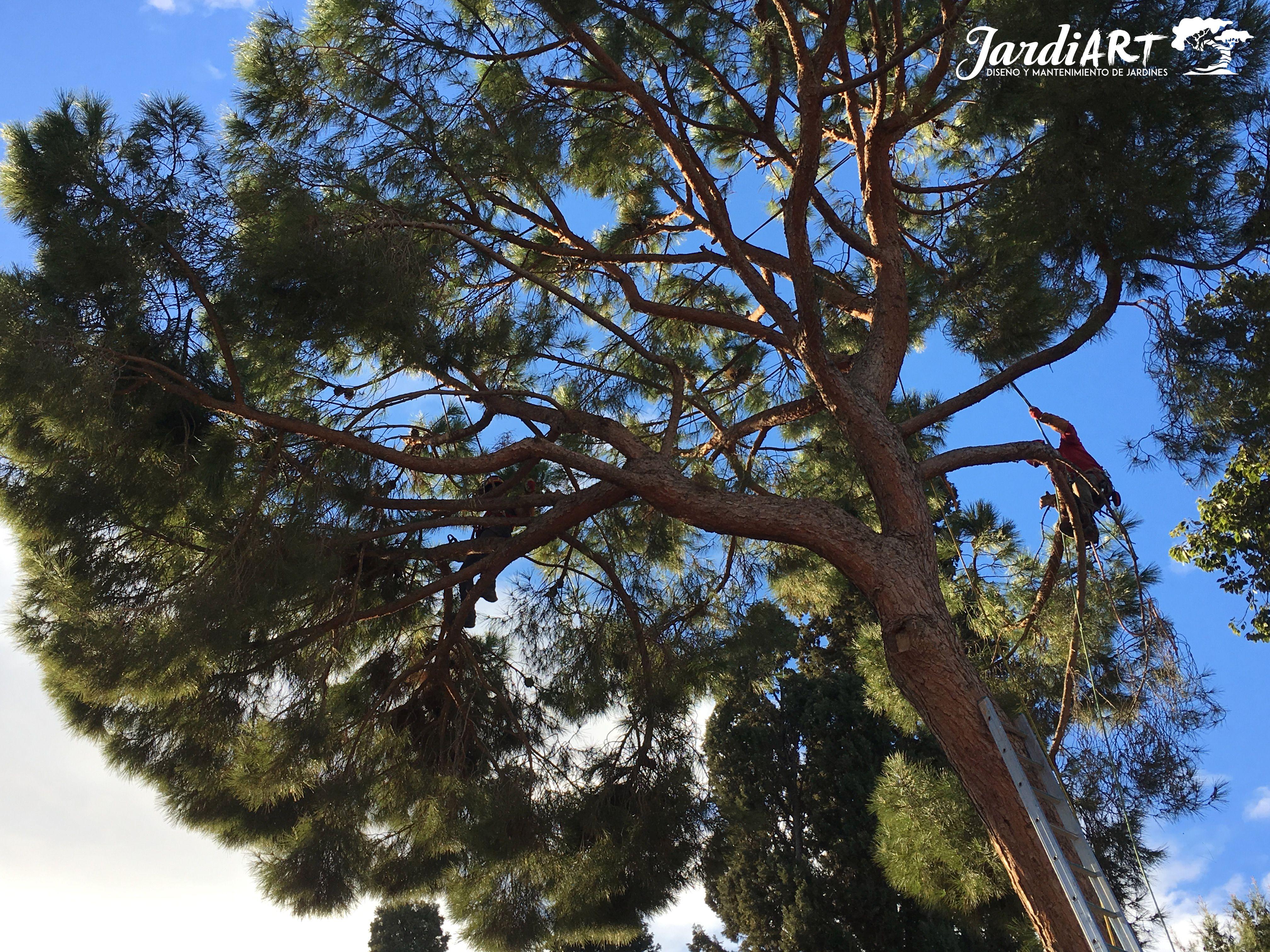 Poda de árboles en Castellón