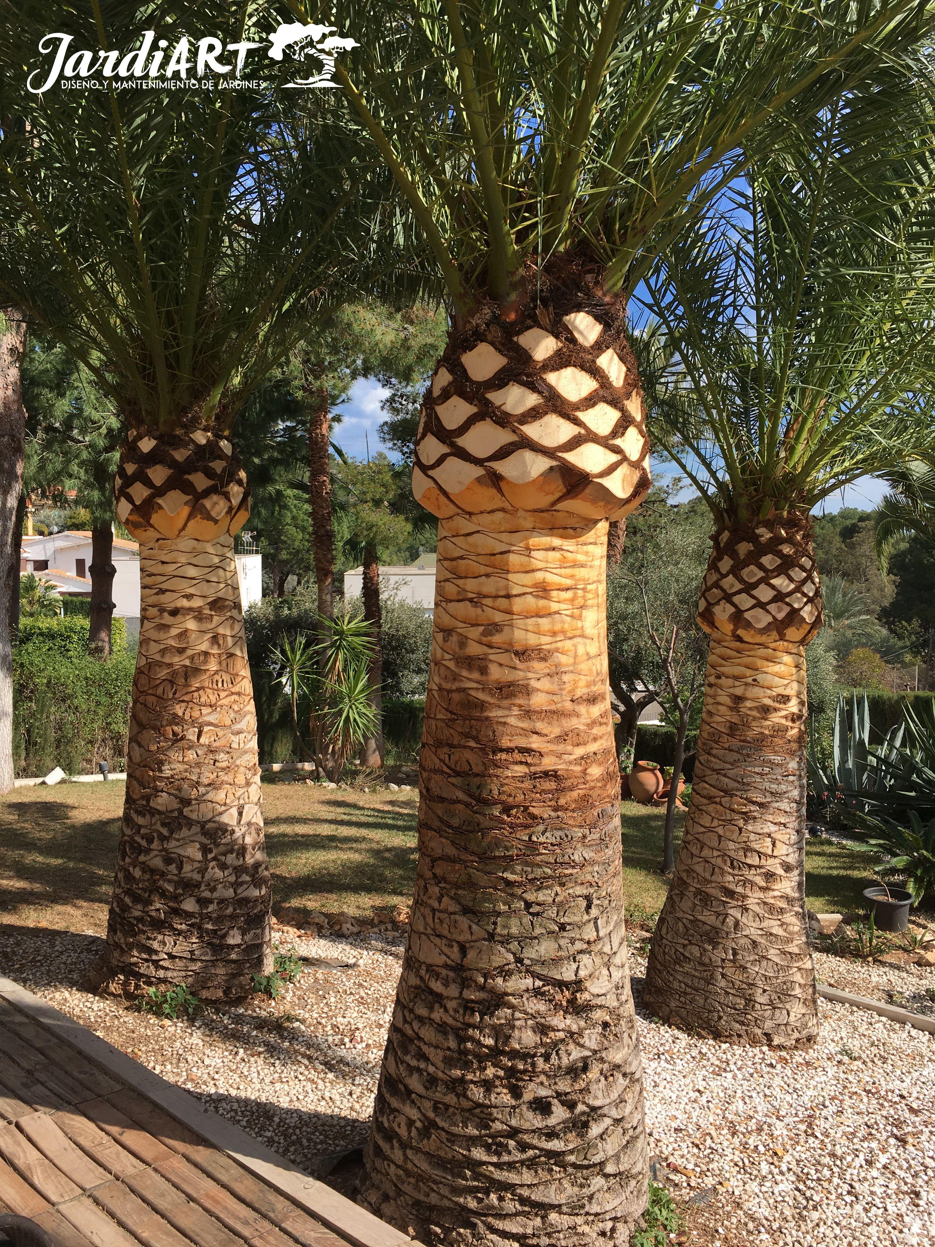 Poda de palmeras en Castellón