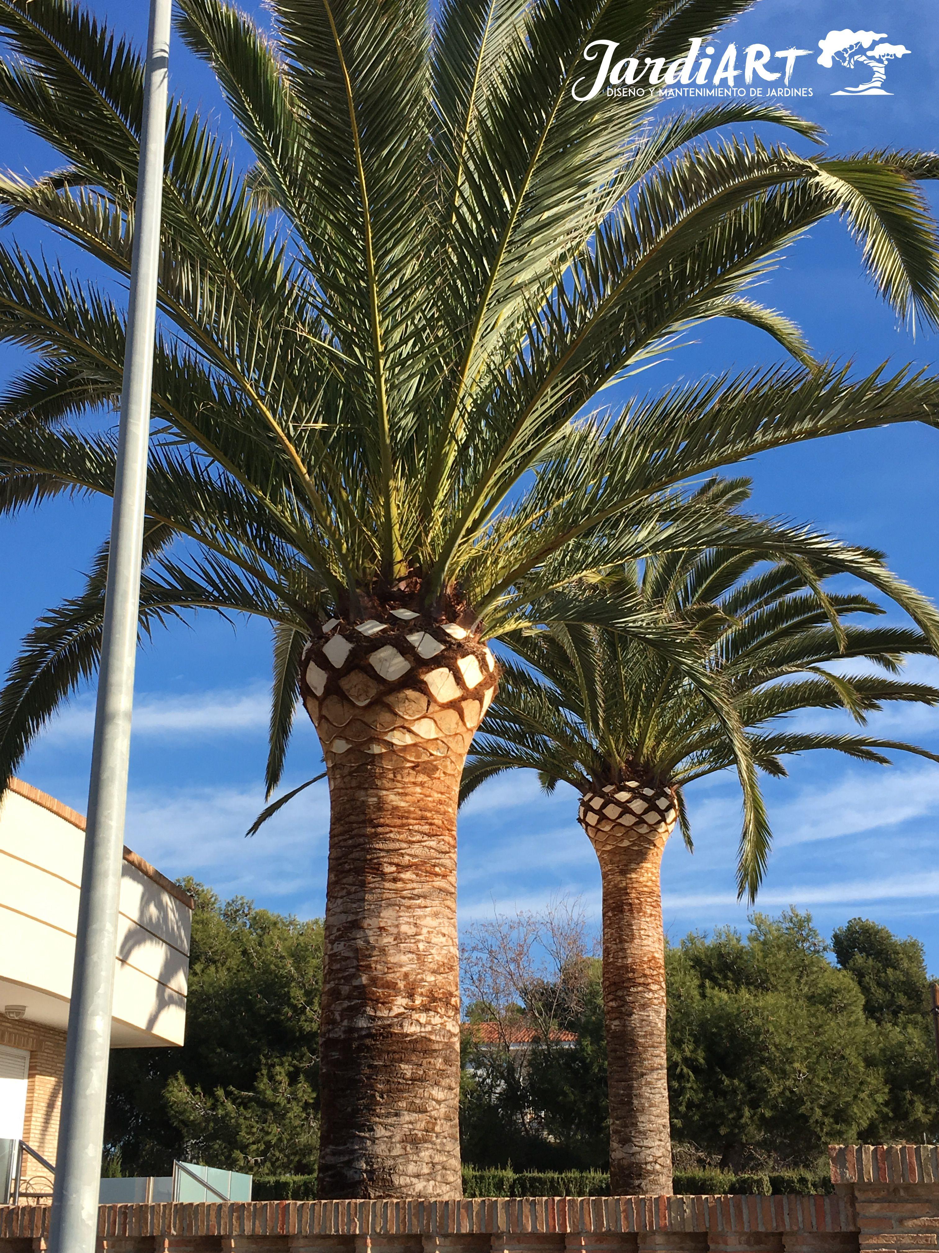 Expertos en poda de palmeras en Castellón