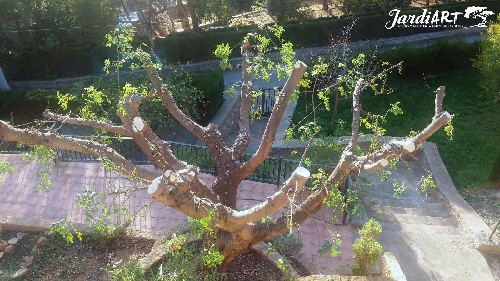Especializados en poda de árboles en Castellón