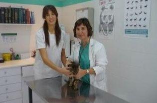 Foto 6 de Veterinarios en Terrassa | Consultori Veterinari Can Parellada
